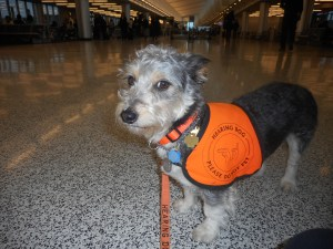 douglas in airport